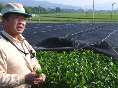 Tea grower in his grove