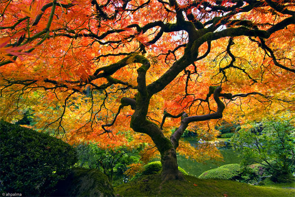 Mellow monk 39 s green tea blog beautiful japanese garden for Arboles de jardin de hoja caduca